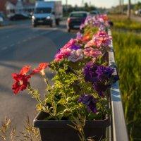 Городские цветы :: Дмитрий Костоусов