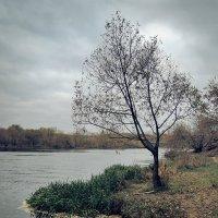 Осень в Крылатском :: Денис Масленников