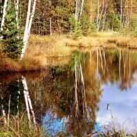 На болоте. :: Марина Харченкова