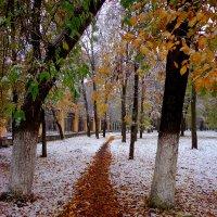 первый снег :: Наталья Сазонова