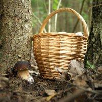 В лесу грибы играли в прятки... :: Елена Kазак