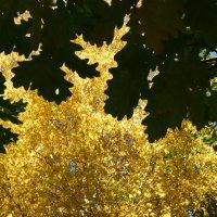 Осень... :: Ксения