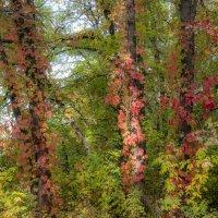 В темный лес дремучий осень заглянула... :: Наталья Димова