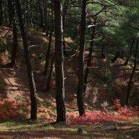 Краски осени ещё не потускнели :: Валерий Дворников