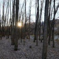 Солнце клонится к закату. :: Elena Sartakova