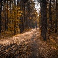 осень в лесу :: Юрий Иванович