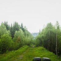 Там на неведомых дорожках :: Мария Федоренко