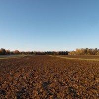 На этих полях в 1812 года были бои в деревне Якубова! :: Андрей Буховецкий