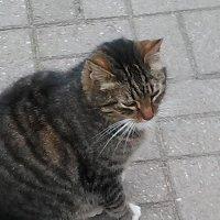Кот, который живет при Казачьей церкви у Обводного канала. :: Светлана Калмыкова