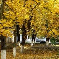 Осенние клёны :: Татьяна Смоляниченко
