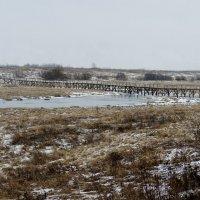 Мост через речку Ракомку :: Елена Павлова (Смолова)