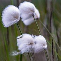 Пушистые цветы. :: Юрий Харченко