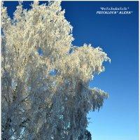 Зима.... :: Алёна PRIVALOVA