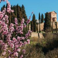 Весна в Тоскане :: Надежда Лаптева