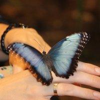 Голубой ангел... :: Tatiana Markova