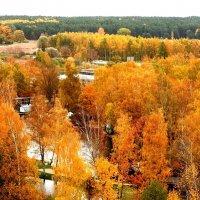 Цветной октябрь :: Александр Михайлов