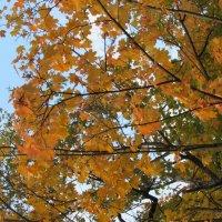 Золотая осень :: Валюша Черкасова