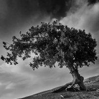 tree :: Vitaliy Dankov