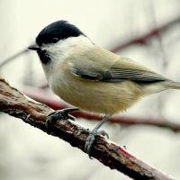 Птицы из парка 3 :: Сергей