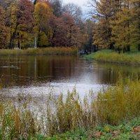 Осень в парке.. :: Светлана