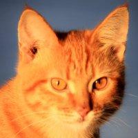 Утренний рыжий кот :: Андрей Страхов