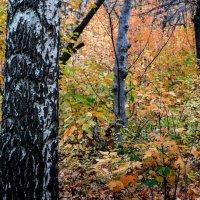 Осенний рисунок :: Владимир Кроливец