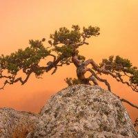 и на камнях растут деревья :: Алексей Яковлев
