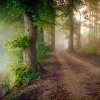 Лес, погруженный в туман :: Elena Wymann