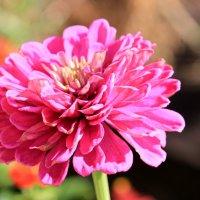 Красивый цветок! :: Галинка