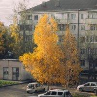 Золотая осень. :: Evgenija Enot