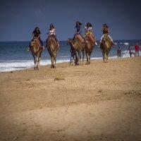 Однажды на пляже :: Светлана marokkanka
