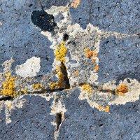 Текстура жизни на камне :: Минихан Сафин