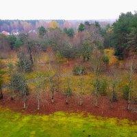 Лес остыл и листья сбросил... :: Tatjana