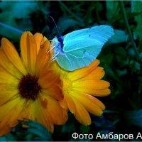 Просто Бабочка :: Андрей