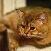 А за котёночка, ответишь! :: Владимир Куликов