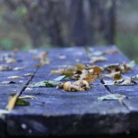 Осень. :: Рустам Ягафаров