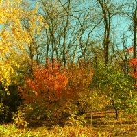 разноцветная осень :: mAri