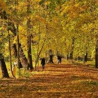 Золотой листопад... :: Sergey Gordoff