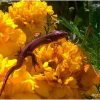 Ящерица на цветке. :: Андрей
