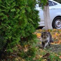 Кот - пpосто кот... :: Анастасия Фомина
