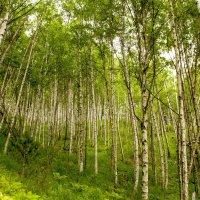 Лес окружает :: Марина Кириллова