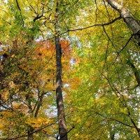 Осень :: Вячеслав Случившийся