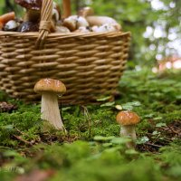 А напоследок в лесу.... :: Елена Kазак