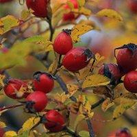 осенний урожай :: оксана