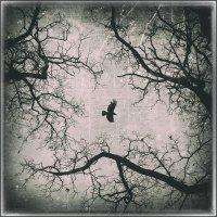 ...и вороны кружат,там где раньше был цветущий сад... :: Вадим