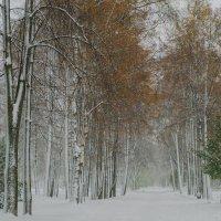 Рыбинск, Набережная :: Alexander Royvels