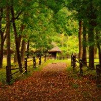 дорога в осень :: Lanna