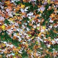 Осенняя мозаика :: Елена Семигина