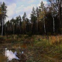 Дождливая осень. :: Валерия  Полещикова