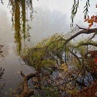 осень..туман.. :: юрий иванов